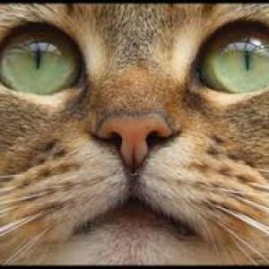 mata kucing keajaiban penciptaan Allah