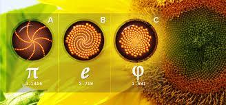 bunga fibonacci 5