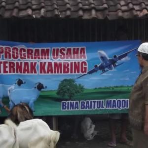 Program Bantuan Ternak Kambing Yayasan Baitul Maqdis di Kec.Bluluk Lamonga