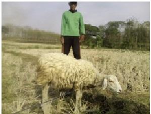 foto-penerima-bantuan-kambing