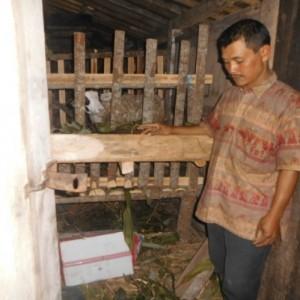 antisipasi pemurtadan lereng gunung merbabu semarang-salatiga TERNAK KAMBING Bapak Suharno