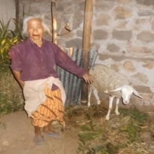 antisipasi pemurtadan lereng gunung merbabu semarang-salatiga TERNAK KAMBING Ibu Resa