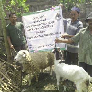 2 Hewan Aqiqah Domba berat +50Kg dan Kambing 30Kg #AQIQAH PRIORITAS RAWAN PEMURTADAN BAITULMAQDIS