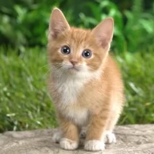 Mengapa Rasulullah shallallahu 'alaihi wasallam menyayangi kucing.