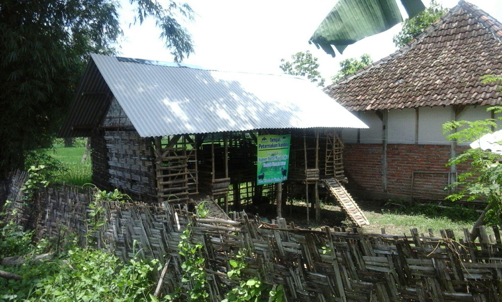 Foto kandang kambing bantuan YBM.