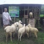 Ust.Abdurrahim bersama dengan kambing-kambing bantuan dari YBM.