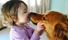 Bukti Ilmiah Kebenaran Bekas Jilatan Anjing Dicuci Dengan Tanah (Mukjizat Hadist)