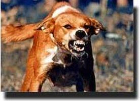 Najisnya 'Anjing' Dibuktikan Sesuai Ilmu Teknologi Modern ( Mukjizat Hadist)