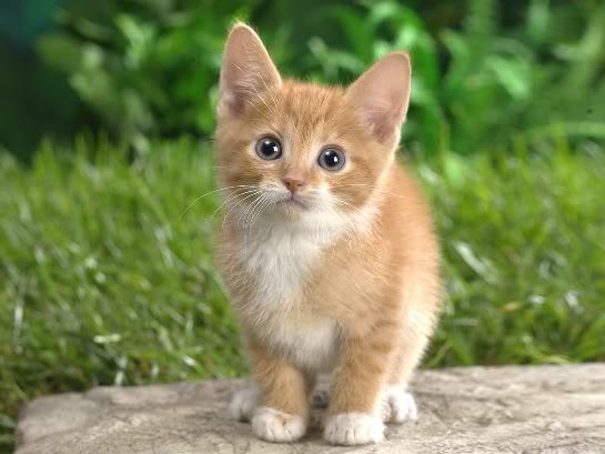 Masya Allah ….Inilah Alasan dan Fakta Ilmiah Mengapa Rasulullah SAW Mengistimewakan Kucing